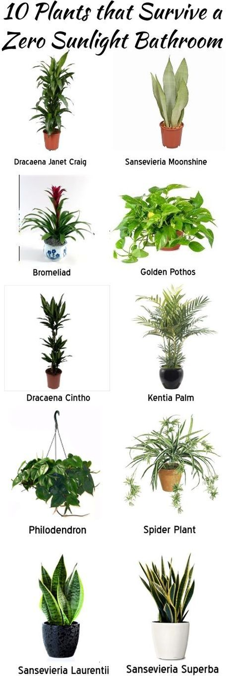 Indoors house plants for Office plants no natural light
