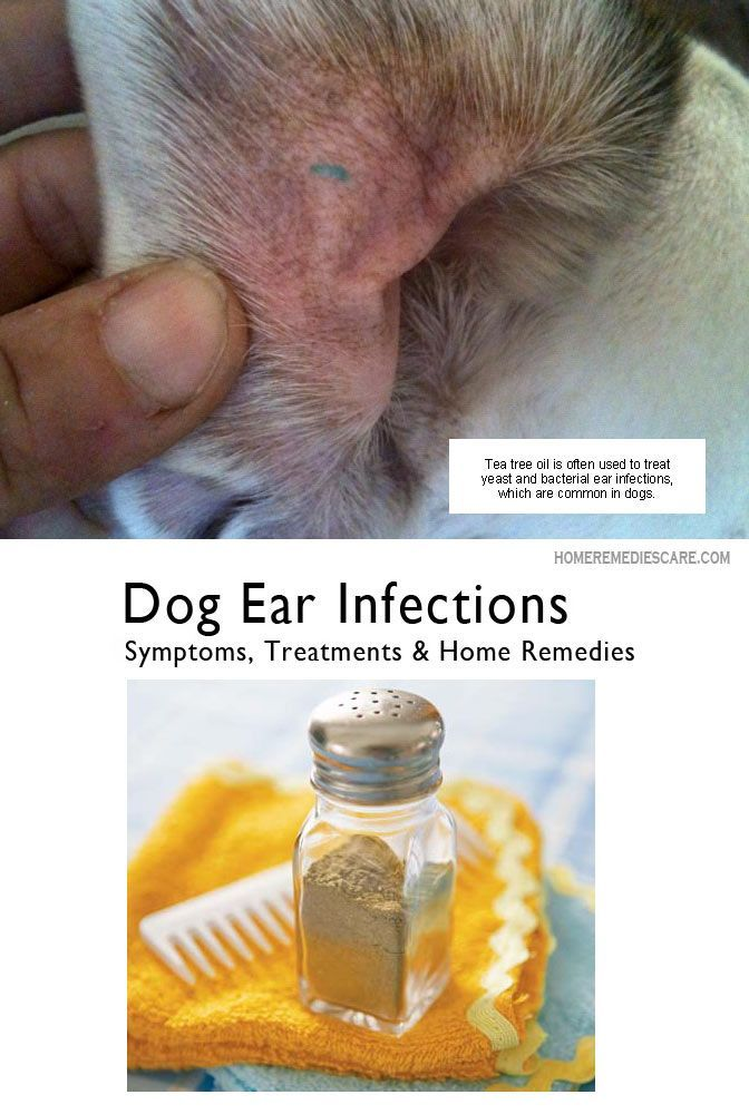 Home Remedies For Dog Ear Infection Uk