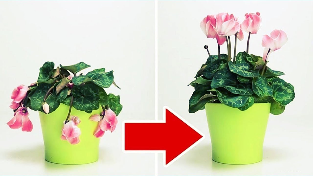 Incredible Plant Tricks and Hacks on How to Take Care of Them
