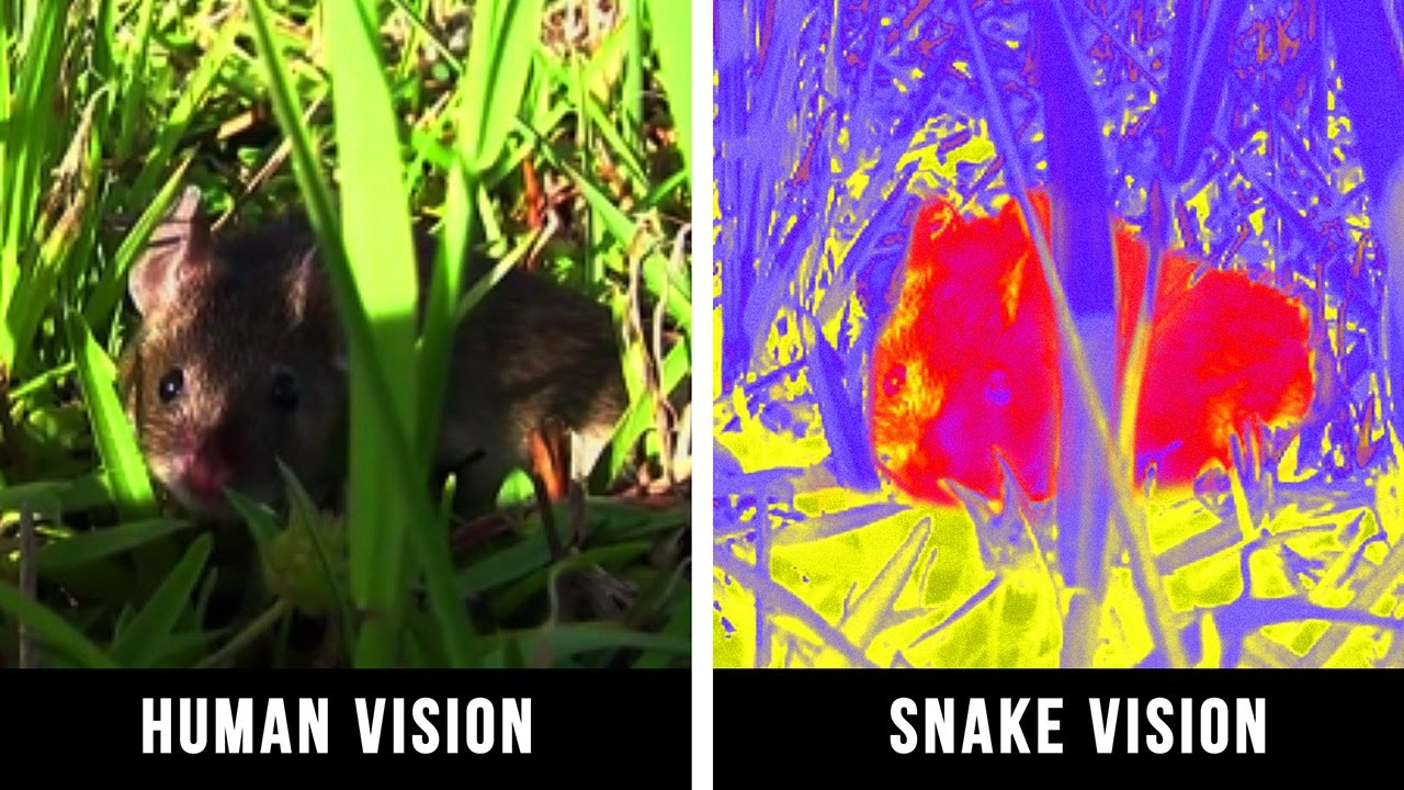 Are You Curious About how Animals See the World